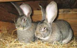 Разведение кроликов на мясо — особенности и советы