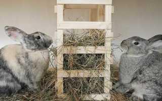 Чем кормить кроликов в домашних условиях: виды кормов, нормы и режим кормления