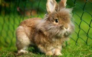 Пенициллин для кроликов: дозировка, инструкция по применению