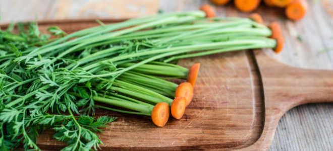 Польза и вред морковной ботва, как применять ее в кулинарии и народной медицине