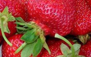 Клубника из семян: особенности выращивания и дачные хитрости