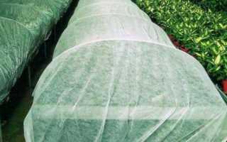 Агроспан — укрывной материал для защиты растений