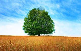 Продолжительность жизни деревьев, сколько живут, таблица, видео