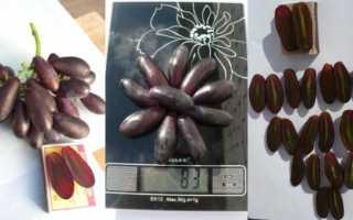 Cорт винограда Яся: посадка, уход, использование, условия выращивания