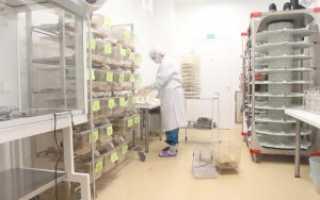 Кролик как лабораторное животное: их породы и роль в лабораторных экспериментах