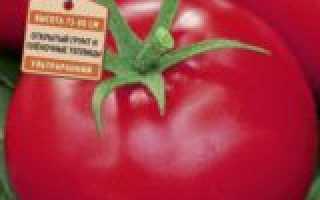 Фото, отзывы, описание, характеристика, урожайность гибрида томата «Афродита F1»