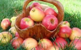 Сорта яблок: летние, осенние, зимние