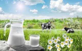 Коровье молоко: вред и польза