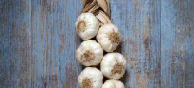 Где и как хранить чеснок, чтобы не высыхал зимой?