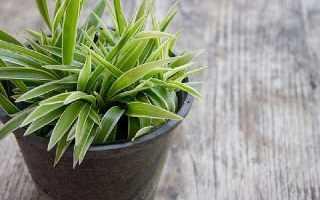 ТОП 15 лучших комнатных растений