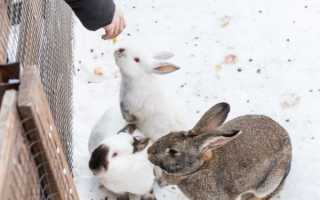 Чем кормят кроликов зимой в домашних условиях
