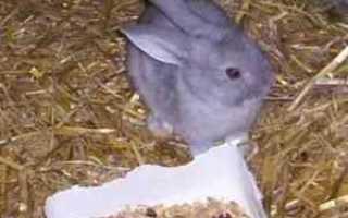 Силос для кроликов, Вопросы проктологии