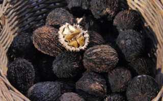 Черный орех: полезные свойства и противопоказания, применение, польза и вред