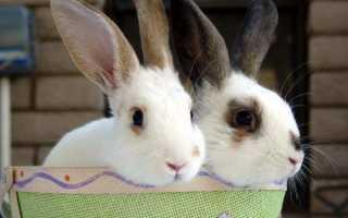 Абсцессы у кроликов: признаки и лечение