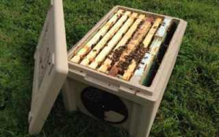 Нуклеус: что это такое? Для чего пчеловодам необходим нуклеус?
