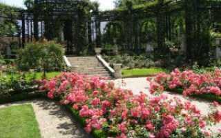 Как сделать розарий на даче своими руками: основные правила разметки и посадки цветов