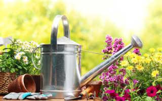 Правильный полив газона летом, весной и осенью