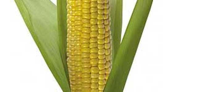 Кукуруза, польза и вред для здоровья, Здоровое питание