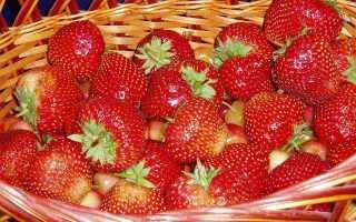 Клубника кардинал: описание сорта, выращивание и уход, размножение