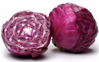 Краснокочанная капуста: калорийность, польза и вред продукта