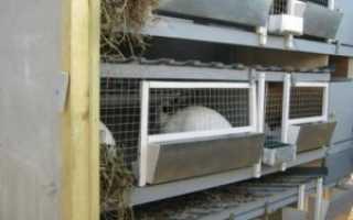 Шедовое содержание кроликов — шеды для кроликов своими руками (фото и видео)