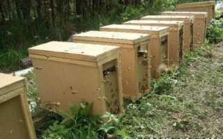 Пчелопакеты: что такое, размеры, фото (карпатка, карника)