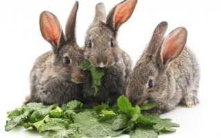 Можно ли кроликам давать щавель?