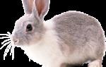 Кормпление, содержание и уход за кроликами в домашних условиях