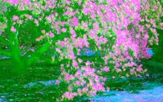 Самые красивые деревья для сада