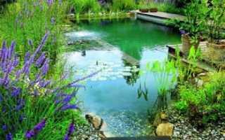 Разведение карпа в домашних условиях в пруду, бассейнах