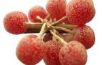 Шефердия серебристая — полезные свойства ягод, их фото