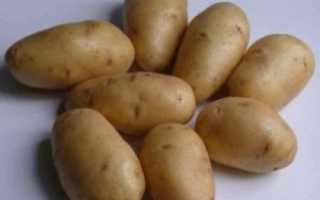 Картофель Импала: описание сорта, фото, отзывы