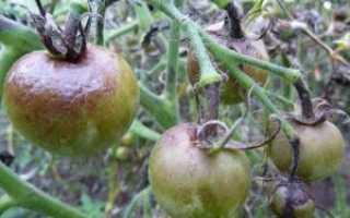 Борьба с фитофторой на помидорах: народные средства