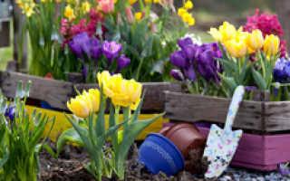 Как правильно ухаживать за тюльпанами после цветения: советы и рекомендации по уходу