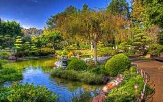 Устройство водоема на участке — Участок и сад — Статьи