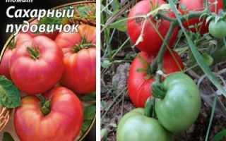 Томат Сахарный пудовичок: описание, особенности выращивания, фото