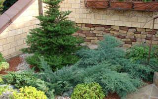 Как посадить ель на участке и обеспечить ей правильный уход