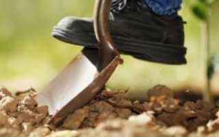 Как сажать картофель «под лопату»: инструкция, видео