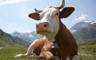 По каким принципам выбраковывать коров Все статьи для правильного ведения животноводства и птицеводства, ИПУП Соитра