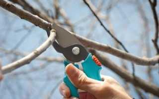 Обрезка деревьев осенью: инструкция, как правильно обрезать кустарник и садовое дерево осенью