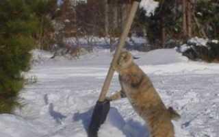 Особенности выбора лопаты для уборки снега