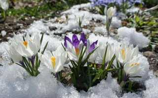 Многолетники, зимующие в открытом грунте: список самых популярных сортов