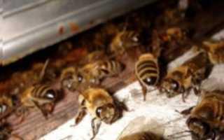 Термокамера для обработки пчел: что такое, как работает, как сделать своими руками