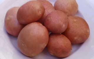 Славянский «хлеб»: лучшие сорта картофеля