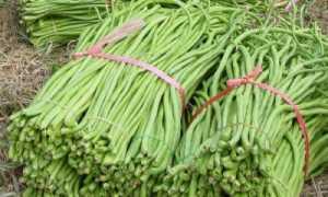 Сорта и виды фасоли