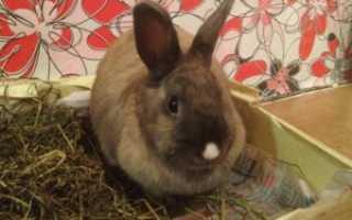 Можно ли кормить кроликов соломой вместо сена: в чём её польза, как давать