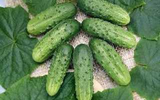 Огурец Лилипут f1: описание сорта, особенности культивирования в открытом грунте, в теплице, правила и способы посадки, уход, отзывы