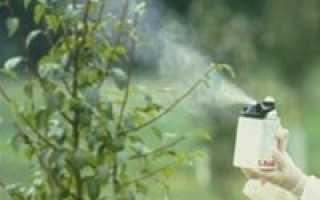 Обработка вишни весной от болезней и вредителей: как и чем обработать и опрыскать вишни
