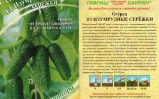 Огурец Изумрудные сережки (F1): отзывы, описание, характеристики, выращивание