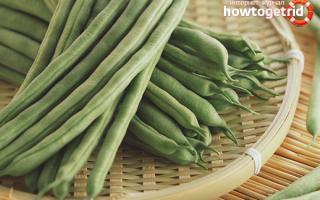 Стручковая фасоль — польза и вред для здоровья